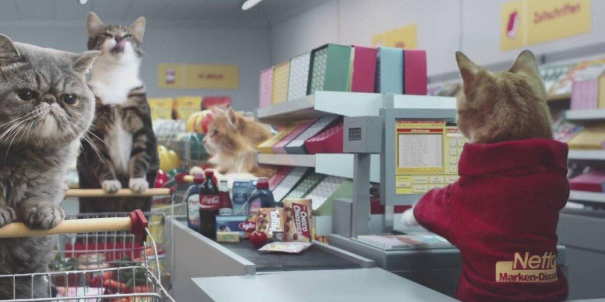 Interneto hitu tapusioje reklamoje – visos garsiausios katės