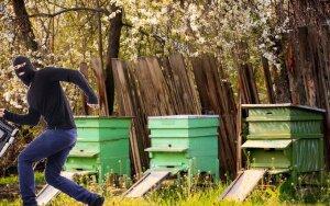 Avilių vagis bitės taip sugėlė, kad šie atsidūrė ligoninėje