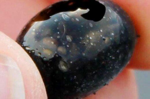 """Kilauea ugnikalnio išspjautas """"drakono kiaušinis"""". iflscience.com nuotr."""