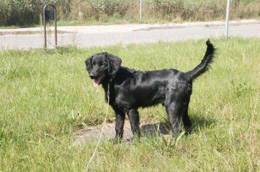 Nemėžyje rastas jaunas šunelis