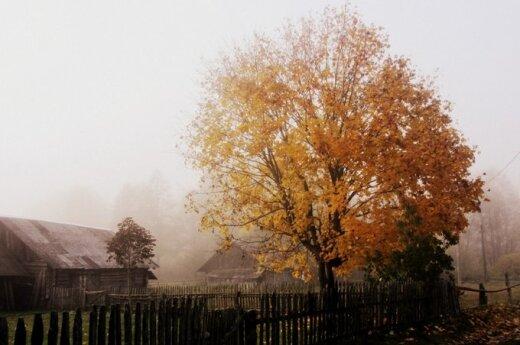 Mano ruduo Lietuvoje: auksiniai lapai, šermukšniai ir nurimusi Neris