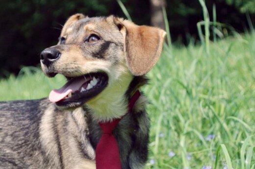 Nedidelis jaunuolis vardu Dogis ieško namų!