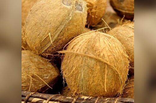 Мозг не состарится у тех, кто ест кокос