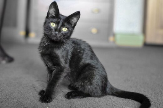 3 mėnesių mažytė bebaimė Mimi ieško namų!