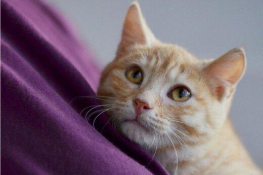 Reto grožio 4 mėn. katinėlis Gustis nori turėti namus!
