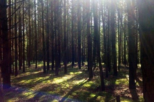 В лесу перевернулся трактор, погиб тракторист