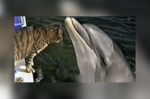 Foto: Кадр из видео
