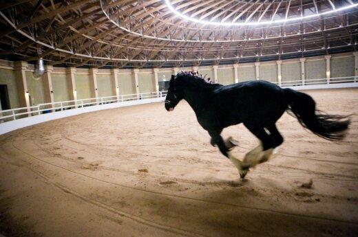 На соревнованиях по конному спорту в Беларуси погиб спортсмен