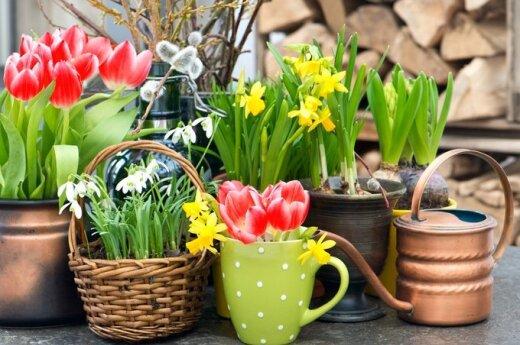 Astrologės Lolitos prognozė balandžio 18 d.: pasiryžimų diena