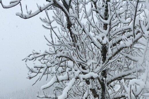 В Литве установится зимняя погода