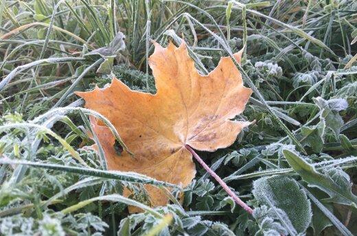 Погода: с каждым днем будет все холоднее