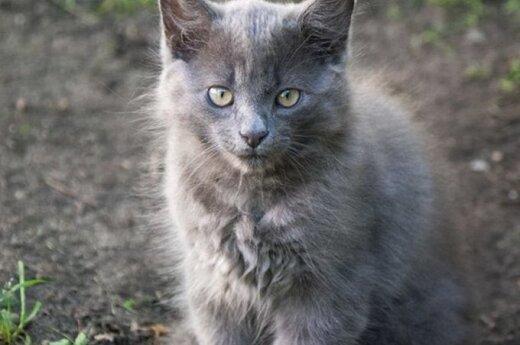Žavingos katytės dairosi gerų namų