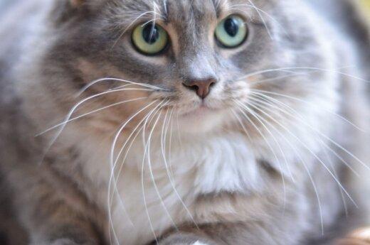 Įspūdinga, bet neįnoringa katytė svajoja apie savo namus!