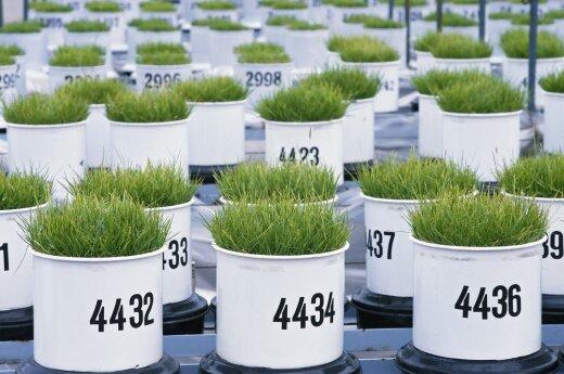 Lietuva neįsileidžia GMO