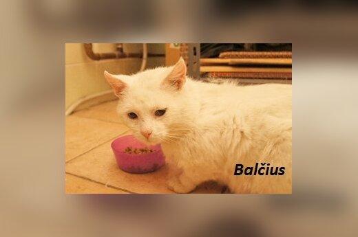 Balcius