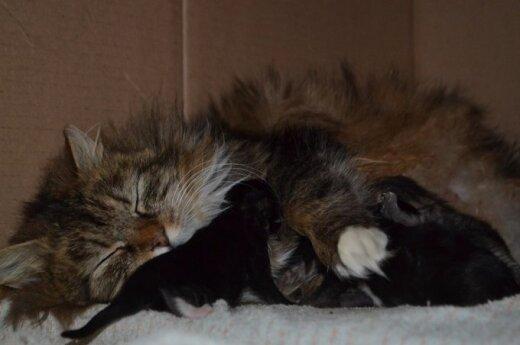 Kirptaausė ir jos kačiukai ieško namų globos
