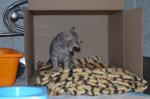 Pilaitės beglobių kačiukų tragedija