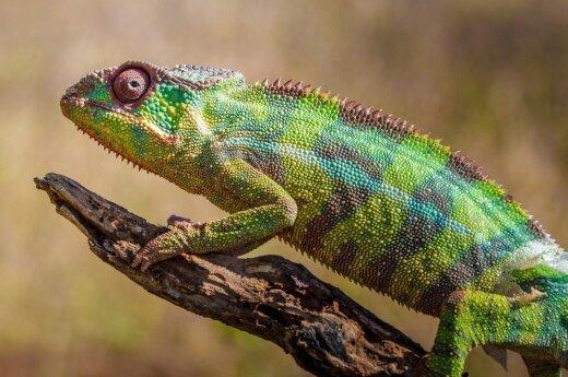Kolor ubrania zmienia się na życzenie – Google zrobi z nas kameleony?