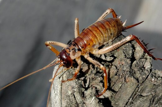 ONZ: Jak wykarmić kolejne miliardy? Może owadami?