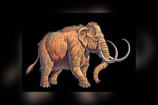 Rosja: Pierwszy klonowany mamut
