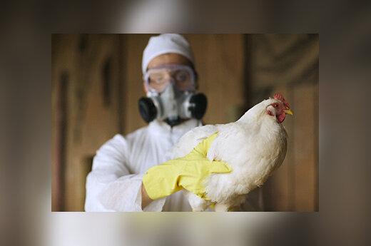 Paukščių gripas