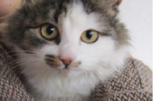 Jaukus, draugiškas 6 mėn. katinėlis prašo išgelbėti iš gatvės!