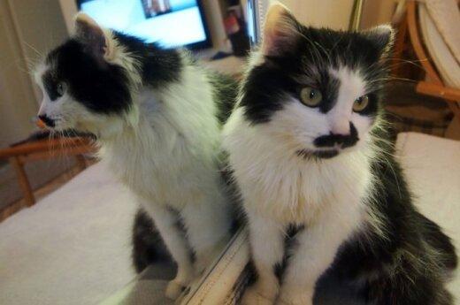 Iš gilios duobės išgelbėta katytė Mapsė ieško namų!