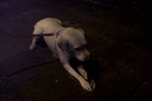 Сосед зверски искалечил собаку девушки