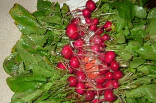 Gruodžio mėnesį valgė savo augintus ridikėlius
