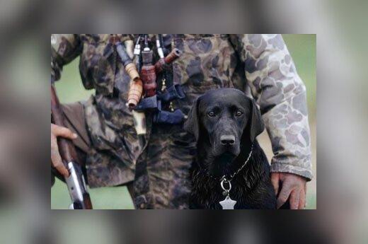 medžioklė, medžioti, šou, šautuvas