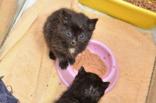 Keturi delno dydžio kačiukai prašo pagalbos!