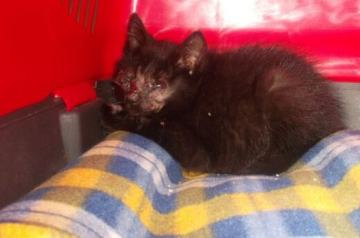 Neišgalvota ir įkvepianti Laimės istorija: kaip kentėjusi katytė rado namus