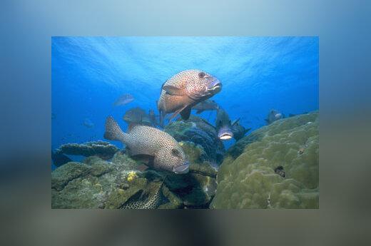 Vandenynas, gelmė, žuvys