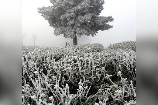 В выходные по ночам заморозки до 5 градусов ниже нуля