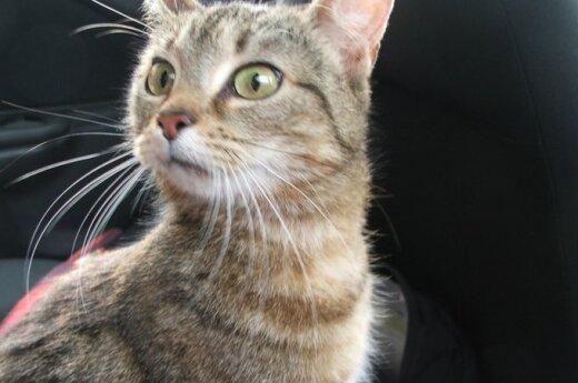 Nuostabiausia pasaulyje katytė Frosija ieško namų