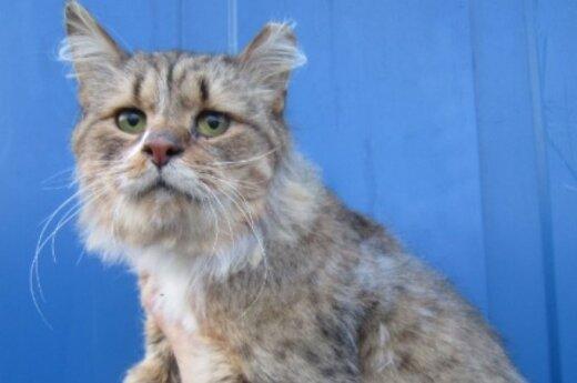 Galėsite girtis, kad turite lūšiuką namuose: katinėlis Liudvikas
