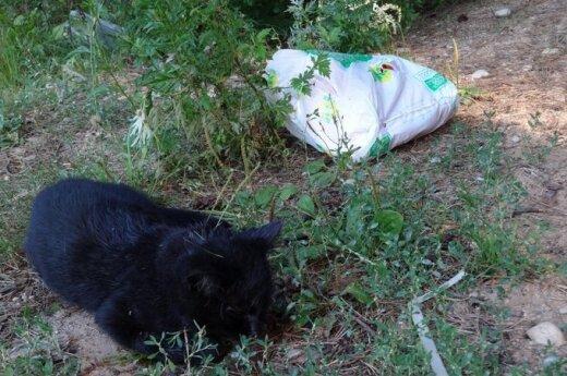Maiše užrišta ir primušta katytė skubiai ieško globos