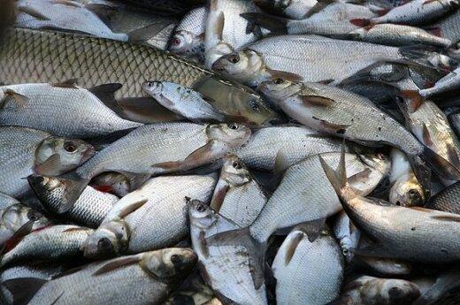 Рыбаки: торговать свежей рыбой - невыгодно