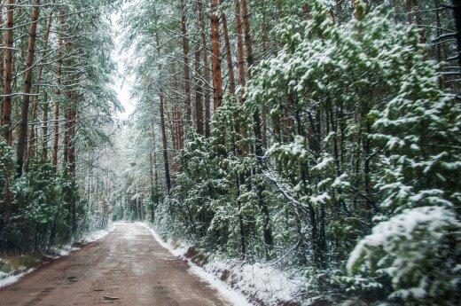Pirmasis sniegas Dzūkijos miške