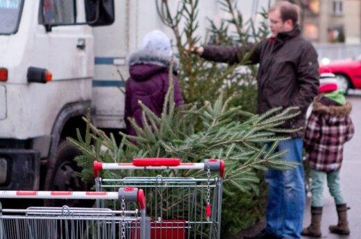 Сколько надо продать елок, чтобы прожить?