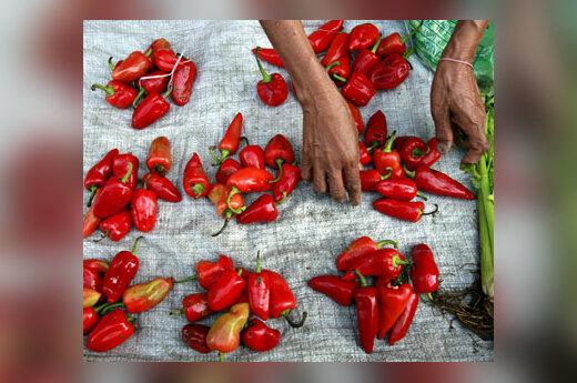 Maniloje (Filipinai) gatvės prekeivė parduoda čili pipirus