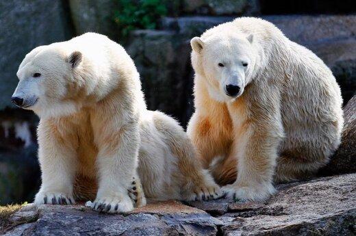 Норвежская экспедиция ищет охранника от белых медведей