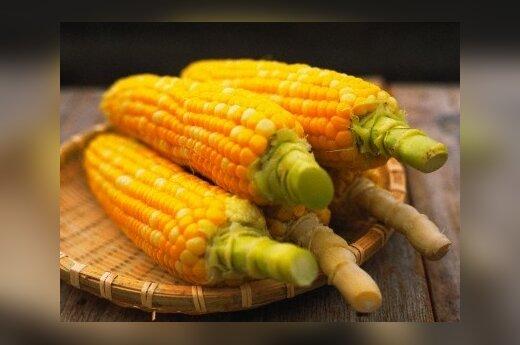 Государственную землю предлагают засадить кукурузой или ивами
