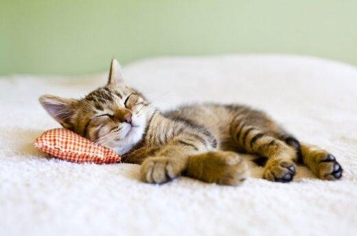 Pasidalink! Miego dienos proga - patarimai miegaliams