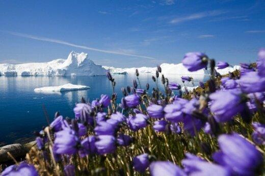 В воскресенье Гренландия станет автономией