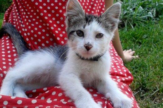 Mažas kačiukas ieško mylinčių šeimininkų