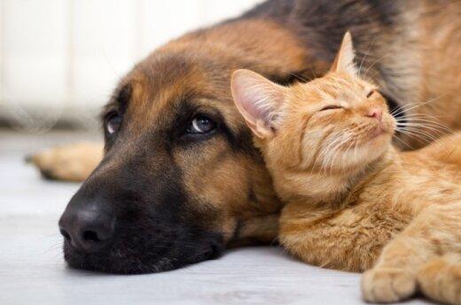 Предлагают новую услугу – страхование собак и кошек