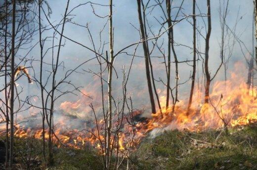 Padegtas miškas - nusikaltimas prieš gamtą