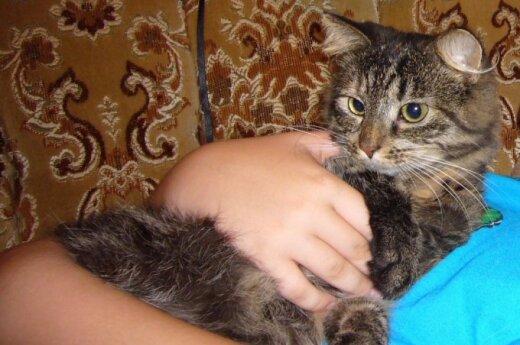 Padėkite rasti mylimą katytę!