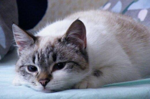 Kalvarijų katinėliai ieško namų
